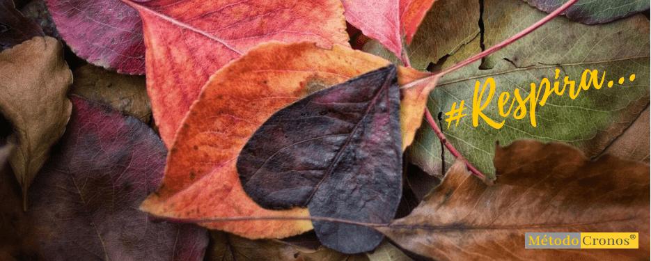 instalar-otoño-método-cronos