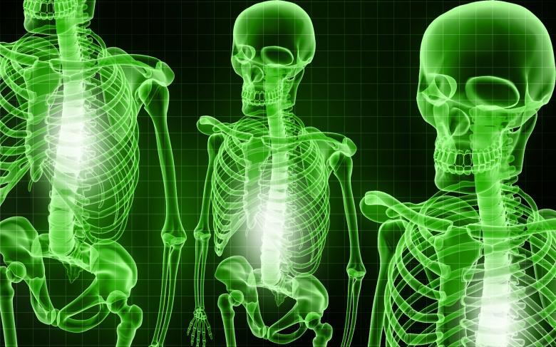 esqueletos-huesos-color verde