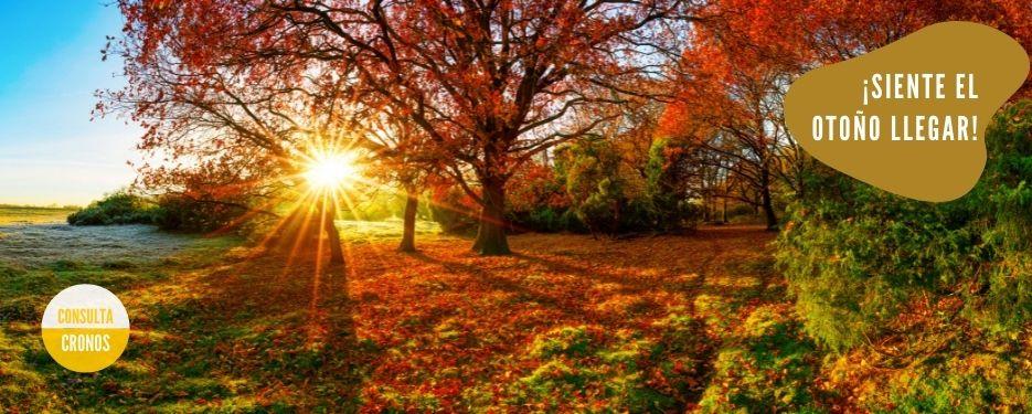 sol y bosque en otoño